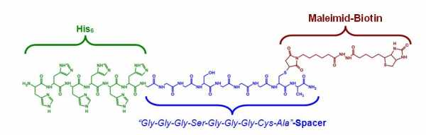 Peptide.jpg